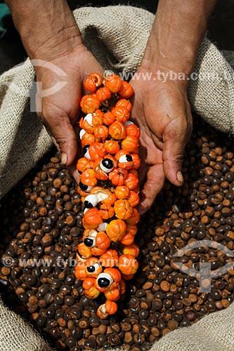 Sementes torradas do Guaraná (Paullinia cupana) com mão segurando um cacho do fruto colhido pelos ribeirinhos  - Maués - Amazonas (AM) - Brasil