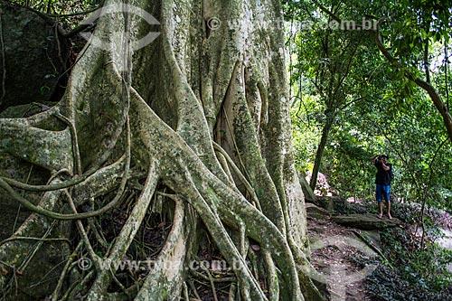 Figueira na trilha para a Praia do Abraãozinho  - Angra dos Reis - Rio de Janeiro (RJ) - Brasil