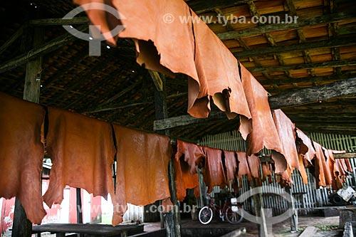 Curtimento do couro de búfalo no Curtume Marajó  - Soure - Pará (PA) - Brasil
