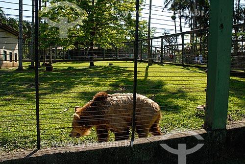 Urso no Jardim Zoológico de Pomerode  - Pomerode - Santa Catarina (SC) - Brasil