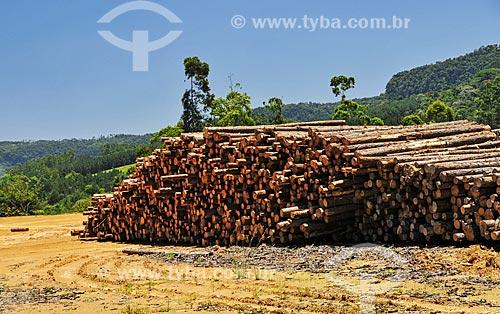 Depósito de troncos de Pinheiro em serraria  - Dona Emma - Santa Catarina (SC) - Brasil