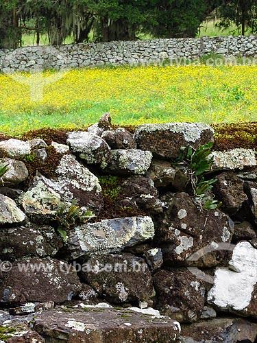 Detalhe de muro de taipa  - São Francisco de Paula - Rio Grande do Sul (RS) - Brasil