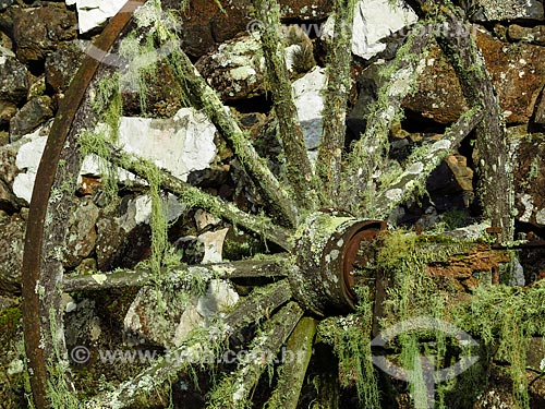 Roda de carreta coberta com Barba-de-pau (Barba-de-velho) - Tillandsia usneoides  - São Francisco de Paula - Rio Grande do Sul (RS) - Brasil