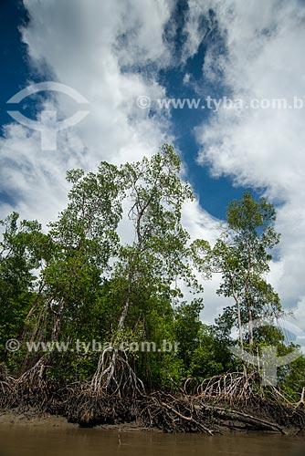 Detalhe de manguezal no Rio Periá  - Humberto de Campos - Maranhão (MA) - Brasil