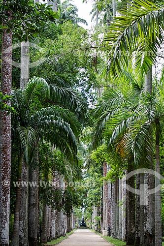 Palmeiras imperiais no Jardim Botânico do Rio de Janeiro com o Chafariz das Musas ao fundo  - Rio de Janeiro - Rio de Janeiro (RJ) - Brasil