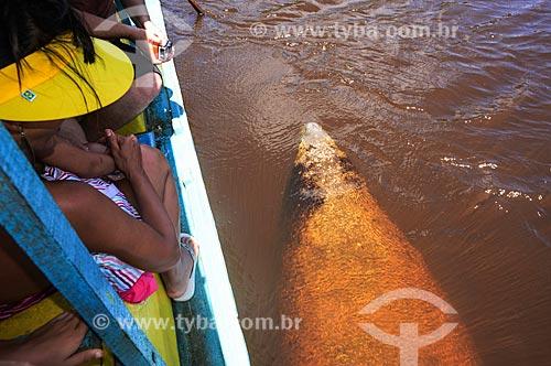 Peixe-boi-marinho (Trichechus manatus) ao lado de barco no Rio Tatuamunha - área do Projeto Peixe-boi - Rota Ecológica de Alagoas  - Porto de Pedras - Alagoas (AL) - Brasil