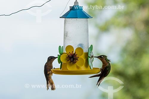 Beija-flores bebendo água em garrafa no Parque Nacional de Itatiaia  - Itatiaia - Rio de Janeiro (RJ) - Brasil