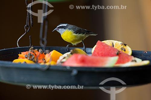 Sebinho ou Cambacica (Coereba flaveola) em comedouro de frutas no Parque Nacional de Itatiaia  - Itatiaia - Rio de Janeiro (RJ) - Brasil