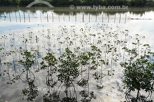 Viveiro do programa ambiental de recuperação do manguezal do Canal do Cunha  - Rio de Janeiro - Rio de Janeiro (RJ) - Brasil