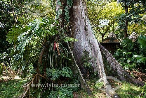 Tronco de árvore Sumaúma (Ceiba pentandra) no Museu Emílio Goeldi  - Belém - Pará (PA) - Brasil