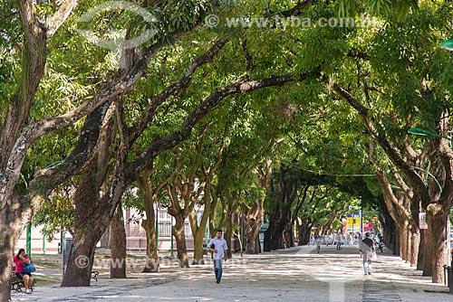 Alameda de mangueiras na Praça da República  - Belém - Pará (PA) - Brasil