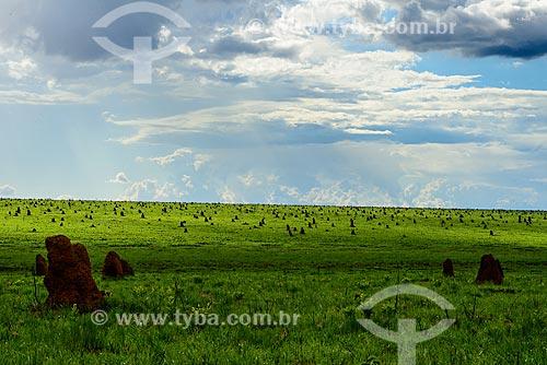 Cupinzeiros no Parque Nacional das Emas  - Mineiros - Goiás (GO) - Brasil