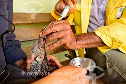 Biólogos do Parque Nacional das Emas amamentando filhote de tamanduá-bandeira (Myrmecophaga tridactyla) - órfão durante queimada  - Mineiros - Goiás (GO) - Brasil