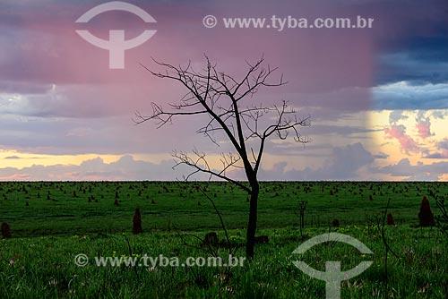 Chuva próximo aos cupinzeiros no Parque Nacional das Emas  - Mineiros - Goiás (GO) - Brasil
