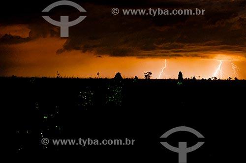 Cupinzeiros no Parque Nacional das Emas durante chuva  - Mineiros - Goiás (GO) - Brasil