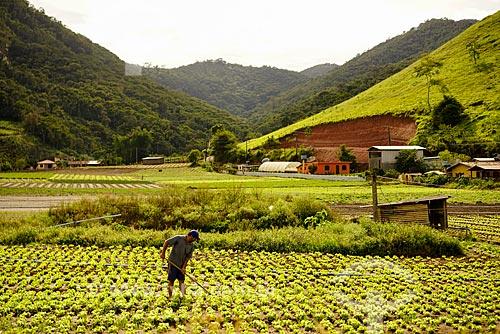 Plantação de hortaliças no bairro Sebastiana do distrito de Venda Nova  - Teresópolis - Rio de Janeiro (RJ) - Brasil