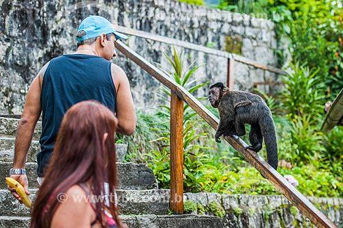 Turistas observando macaco-prego (Sapajus nigritus) no Parque Nacional de Itatiaia  - Itatiaia - Rio de Janeiro (RJ) - Brasil