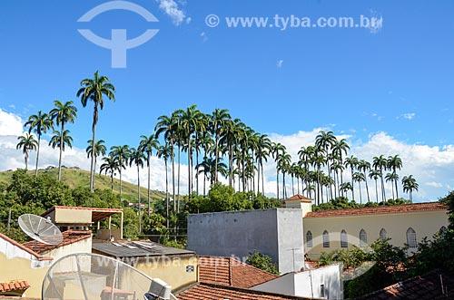 Palmeira imperial na cidade de Paraíba do Sul  - Paraíba do Sul - Rio de Janeiro (RJ) - Brasil