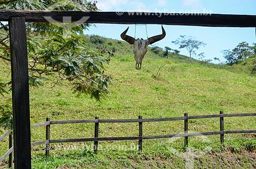 Crânio de boi pendurado próximo à fazenda na zona rural da cidade de Paraíba do Sul  - Paraíba do Sul - Rio de Janeiro (RJ) - Brasil