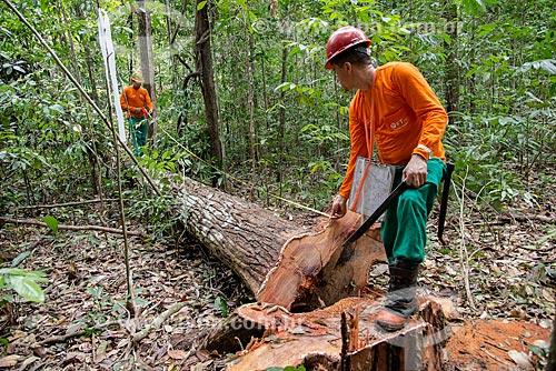 Técnicos do Instituto Floresta Tropical (IFT) medindo árvore cortada no Centro de Manejo Florestal Roberto Bauch  - Paragominas - Pará (PA) - Brasil