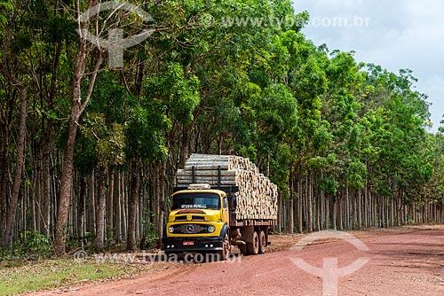 Transporte de troncos de Paricá (Schizolobium parahyba var amazonicum) com caminhão e árvores de mogno (Swietenia macrophylla) ao fundo  - Paragominas - Pará (PA) - Brasil
