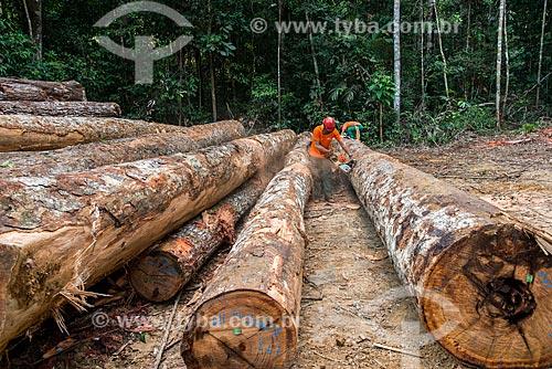 Corte de toras que irão para as serrarias  - Paragominas - Pará (PA) - Brasil