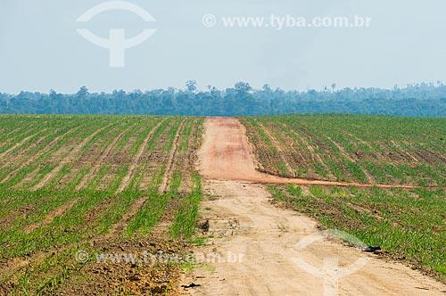 Plantação de cana-de-açúcar em antiga área Floresta Amazônica  - Paragominas - Pará (PA) - Brasil