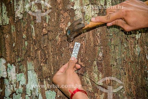 Técnico colocando identificação em árvore  - Paragominas - Pará (PA) - Brasil