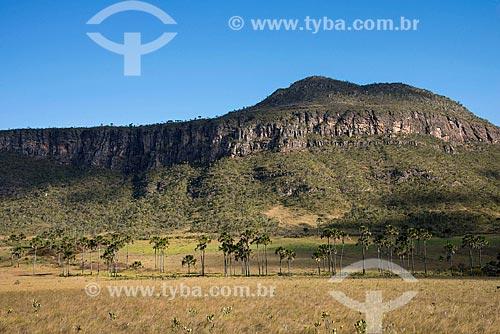 Buritis (Mauritia flexuosa) no Jardim de Maytrea com o Morro do Buracão ao fundo  - Alto Paraíso de Goiás - Goiás (GO) - Brasil