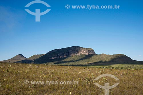 Buritis (Mauritia flexuosa) no Jardim de Maytrea - Parque Nacional da Chapada dos Veadeiros  - Alto Paraíso de Goiás - Goiás (GO) - Brasil