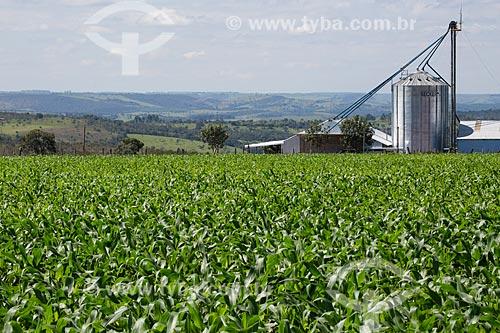 Plantação de milho no Km 410 da BR-414 próximo à Abadiânia  - Abadiânia - Goiás (GO) - Brasil