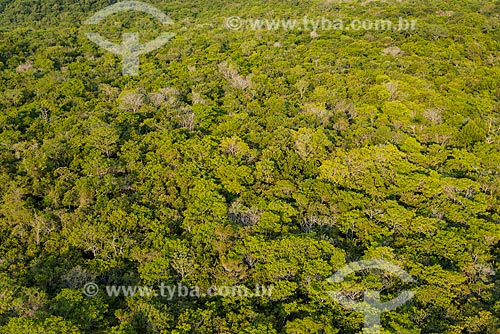 Foto aérea de árvores nas margens do Rio Tapajós próximo ao distrito de Alter-do-Chão  - Santarém - Pará (PA) - Brasil