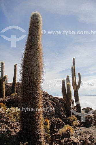 Cactos na Isla Pescado (Ilha do Pescado) - também conhecida como Isla Incahuasi  - Uyuni - Departamento Potosí - Bolívia