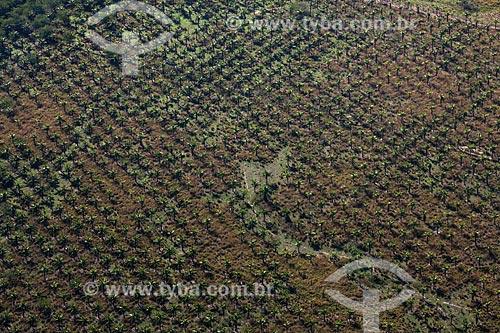 Foto aérea de plantação de côco  - Rio de Janeiro - Rio de Janeiro (RJ) - Brasil