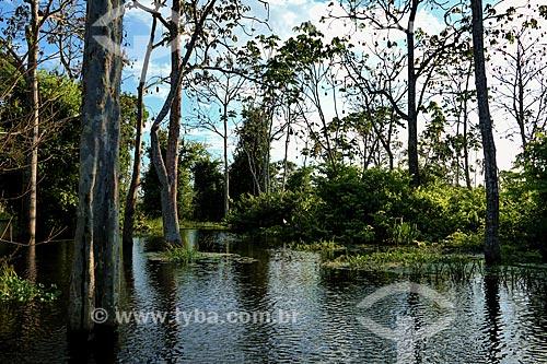 Área de Igarapé próxima a cidade de Parintins  - Parintins - Amazonas (AM) - Brasil