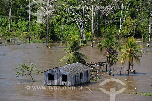 Casa às margens do Rio Amazonas próximo à Urucará durante a época de cheia  - Urucará - Amazonas (AM) - Brasil