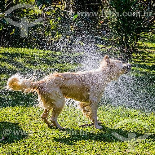 Cachorro se sacudindo para se secar  - Bocaina de Minas - Minas Gerais (MG) - Brasil