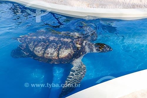 Tartaruga-de-Pente (Eretmochelys imbricata) no aquário do Projeto TAMAR  - Mata de São João - Bahia (BA) - Brasil