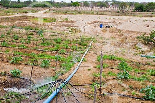 Plantação de feijão irrigada com água de poço  - Cabaceiras - Paraíba (PB) - Brasil