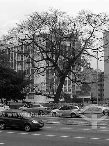 Tráfego na Rua da Consolação  - São Paulo - São Paulo (SP) - Brasil