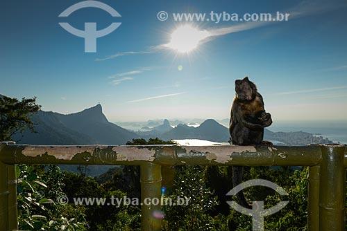 Detalhe de macaco-prego (Sapajus nigritus) próximo à Vista Chinesa no Parque Nacional da Tijuca - com o Cristo Redentor ao fundo  - Rio de Janeiro - Rio de Janeiro (RJ) - Brasil