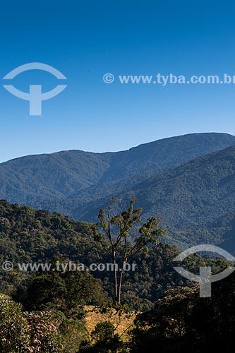 Jequitibá (Cariniana ianeirensis) no Vale das Cruzes  - Resende - Rio de Janeiro (RJ) - Brasil
