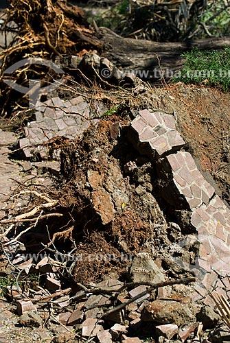 Detalhe de raízes de árvores arrancadas após tempestade  - Porto Alegre - Rio Grande do Sul (RS) - Brasil