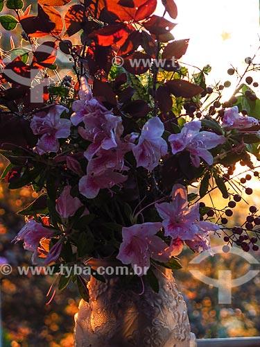 Detalhe de vaso com azaleias  - Canela - Rio Grande do Sul (RS) - Brasil