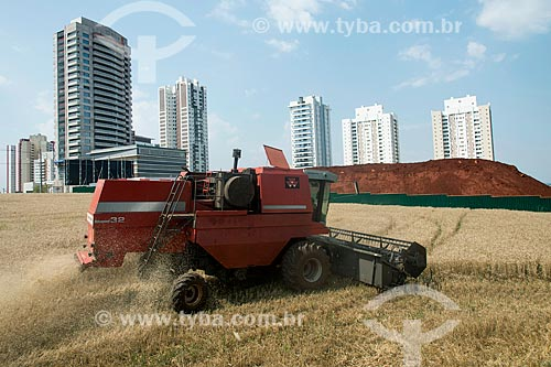 Colheita mecanizada de trigo em área urbana  - Londrina - Paraná (PR) - Brasil