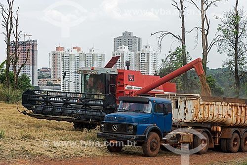 Descarga de trigo durante a colheita em área urbana  - Londrina - Paraná (PR) - Brasil