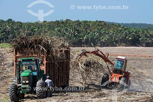Máquinas agrícolas durante a colheita da cana-de-açúcar com a Mata dos Cocais ao fundo  - Teresina - Piauí (PI) - Brasil