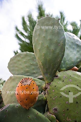 Detalhe de Figo-da-Índia (Opuntia ficus-indica)  - Agrigento - Província de Agrigento - Itália