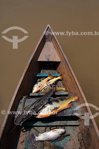 Detalhe de peixes pescados no Rio Amazonas  - Manaus - Amazonas (AM) - Brasil