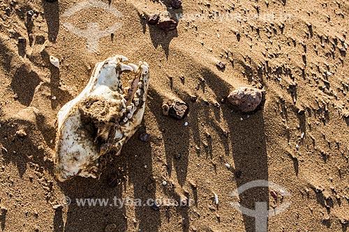 Crânio de cachorro no Deserto do Atacama  - Iquique - Província de Iquique - Chile